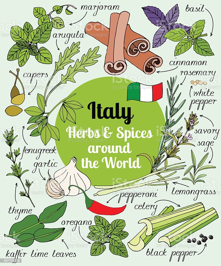Italy herbs and spices. vector art illustration