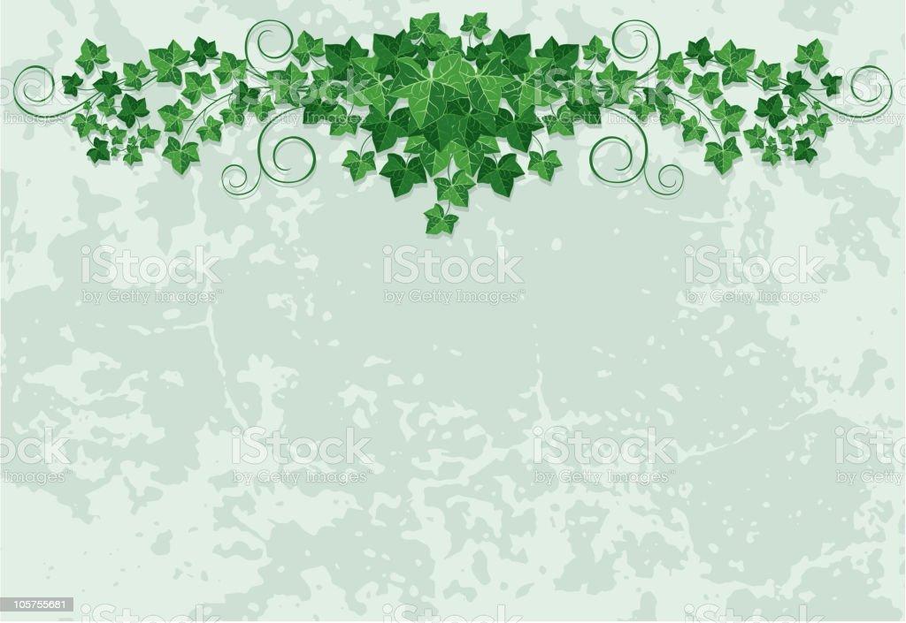 Ivy design for a card or event promo vector art illustration