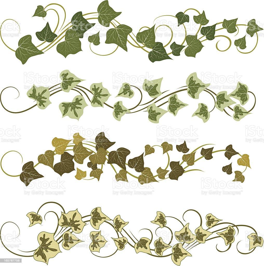 ivy vector art illustration