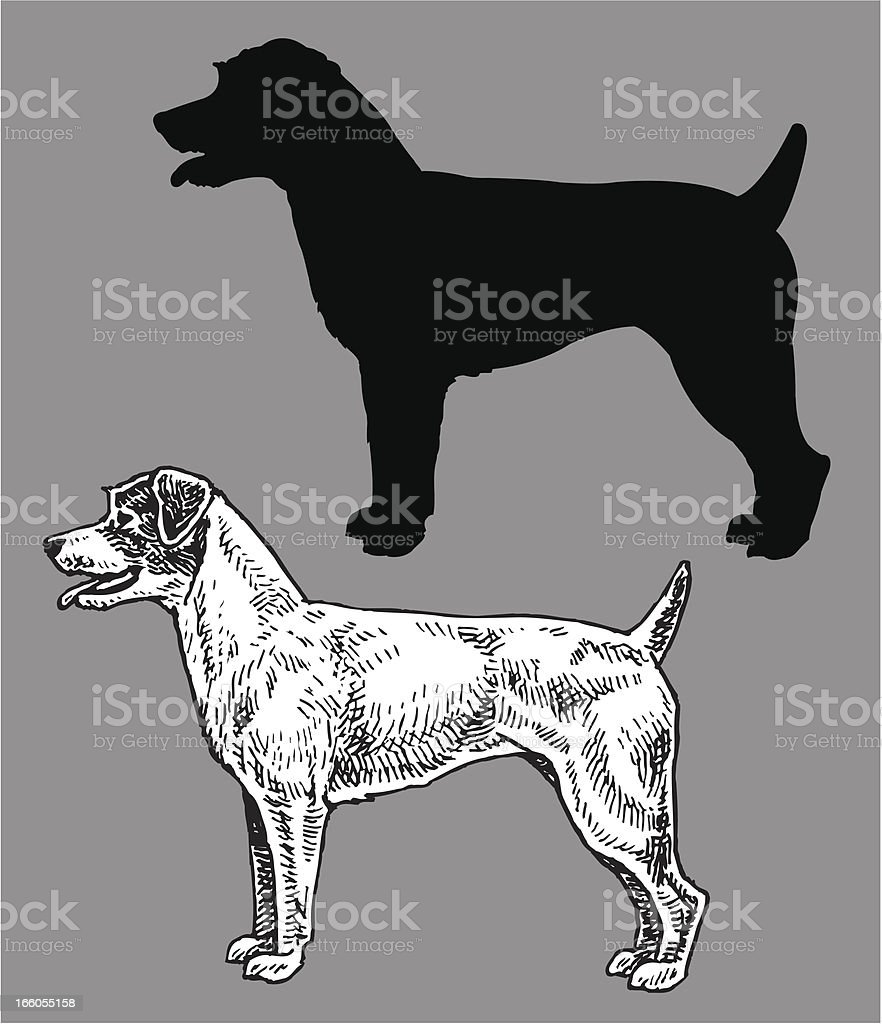 Jack Russell Terrier - Dog, domestic pet royalty-free stock vector art
