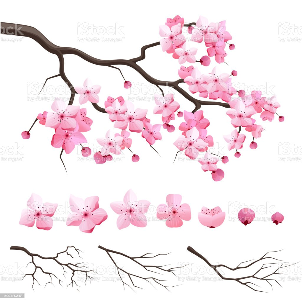 Japan sakura cherry branch with blooming flowers vector art illustration