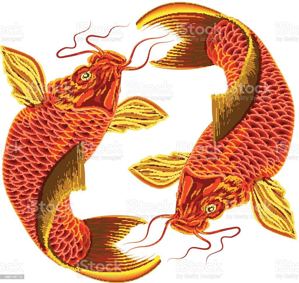 Japanese carp on a white background. vector art illustration