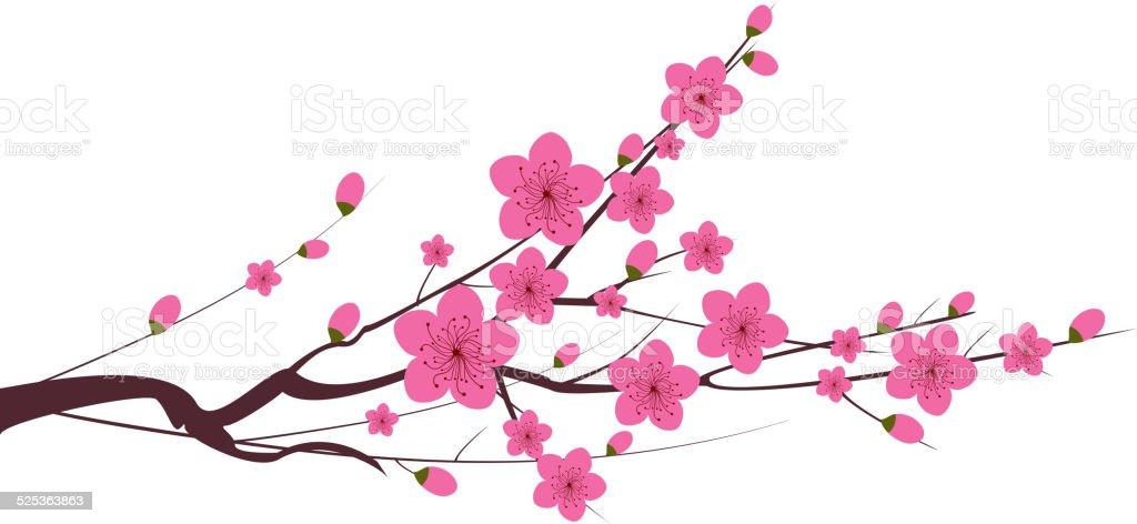 Japanese plum blossom vector art illustration