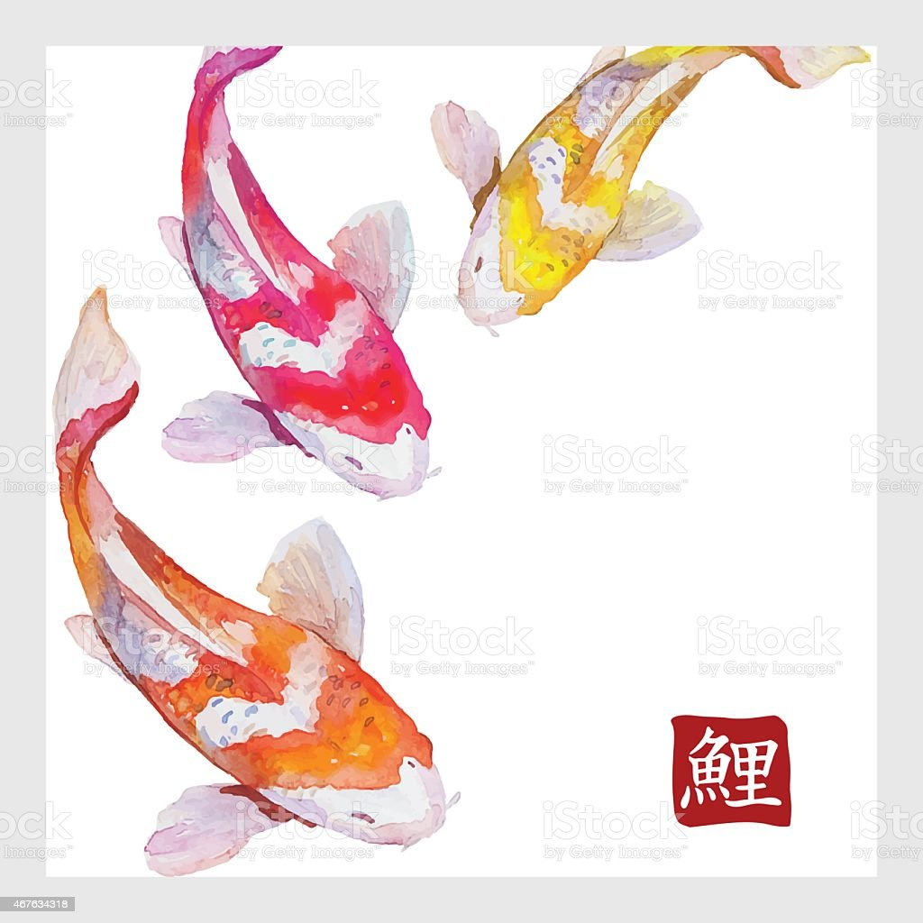 Japanese watercolor carps koi swimming. Calligraphic simbol vector art illustration