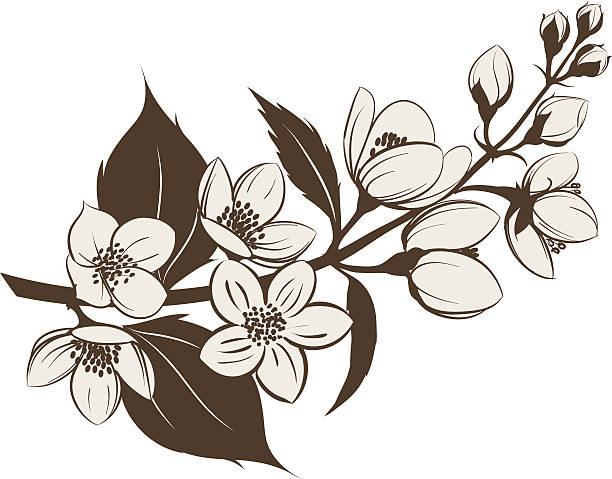 jasmine flower clip art vector images illustrations. Black Bedroom Furniture Sets. Home Design Ideas
