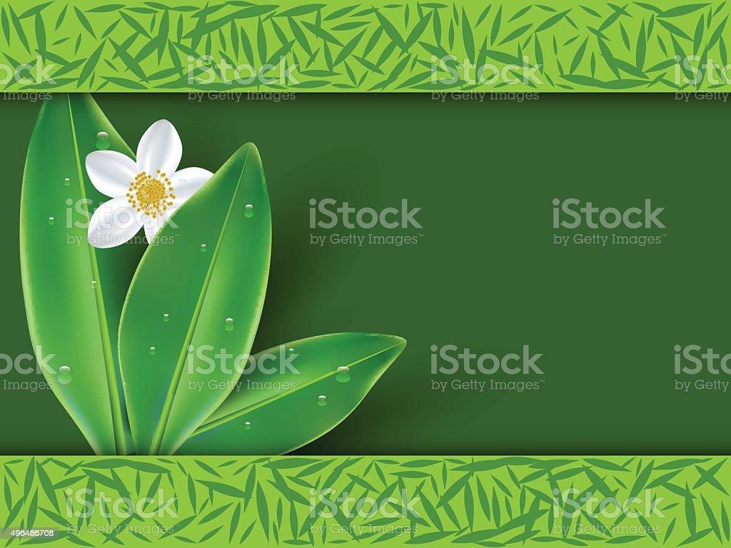 Jasmine tea with jasmine flowers vector art illustration