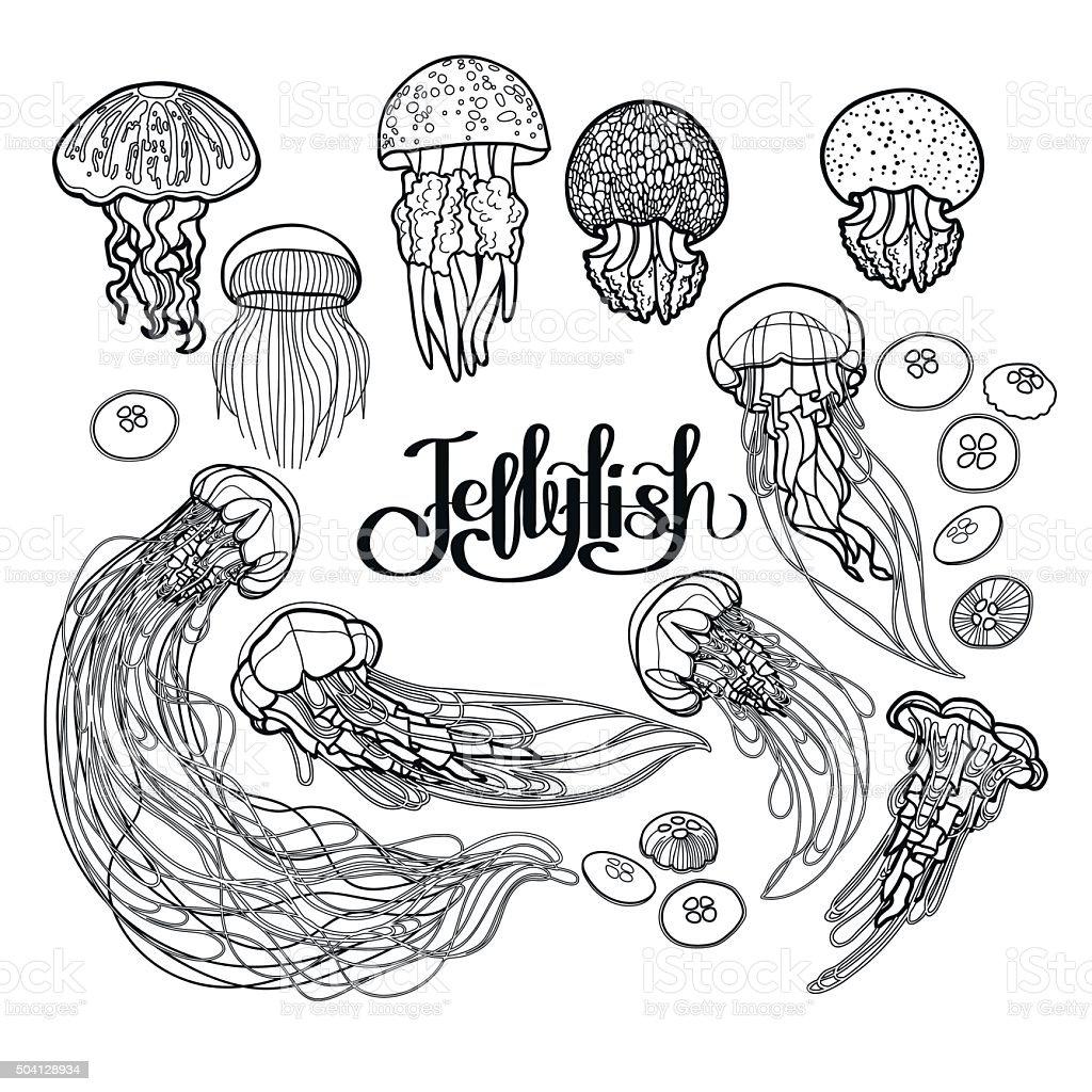 Jellyfish in line art style vector art illustration