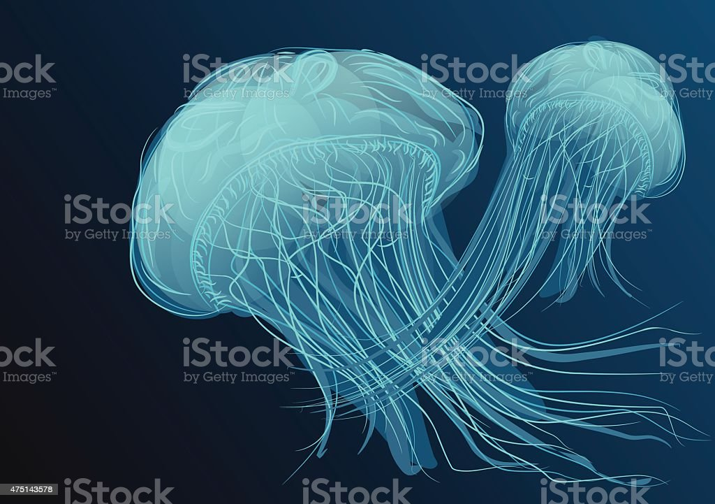 jellyfish vector art illustration
