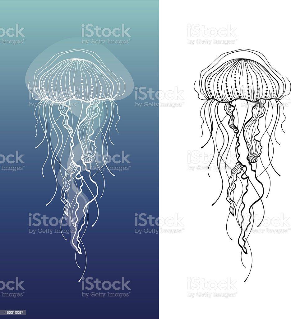 Jellyfish1 vector art illustration