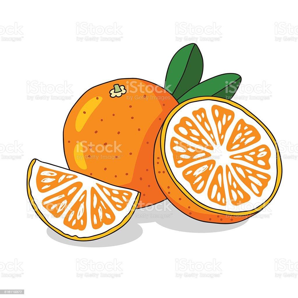 Juicy orange. Sunny summer fruit vector art illustration