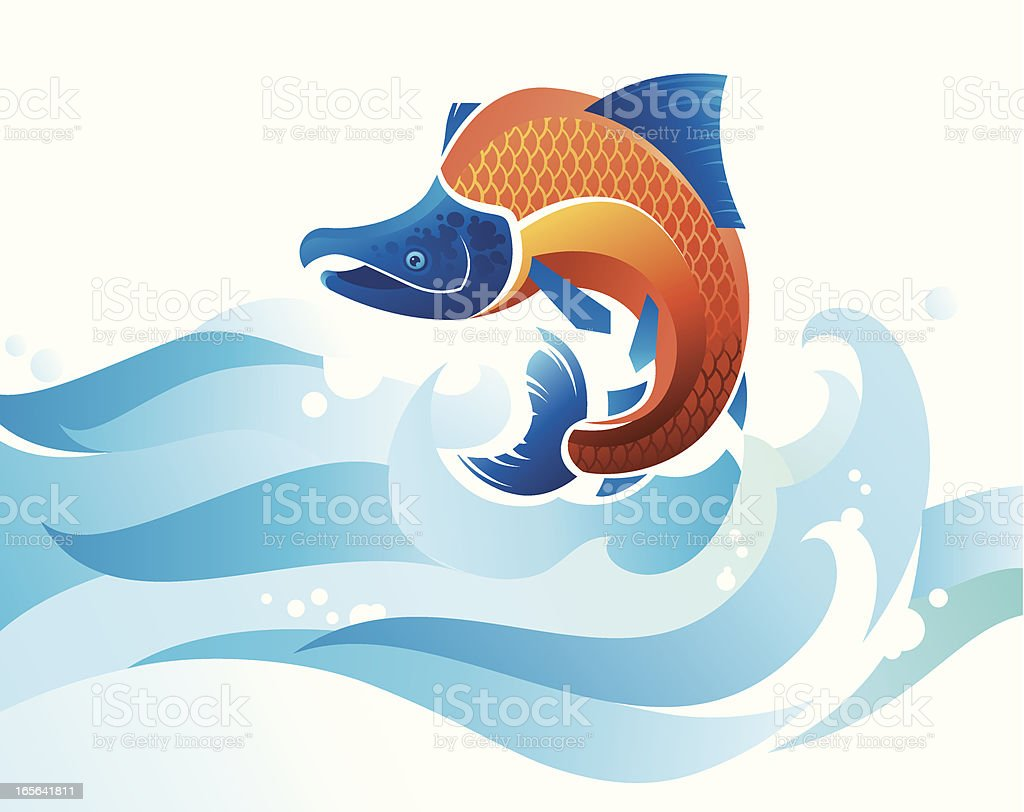 Jumping Salmon royalty-free stock vector art