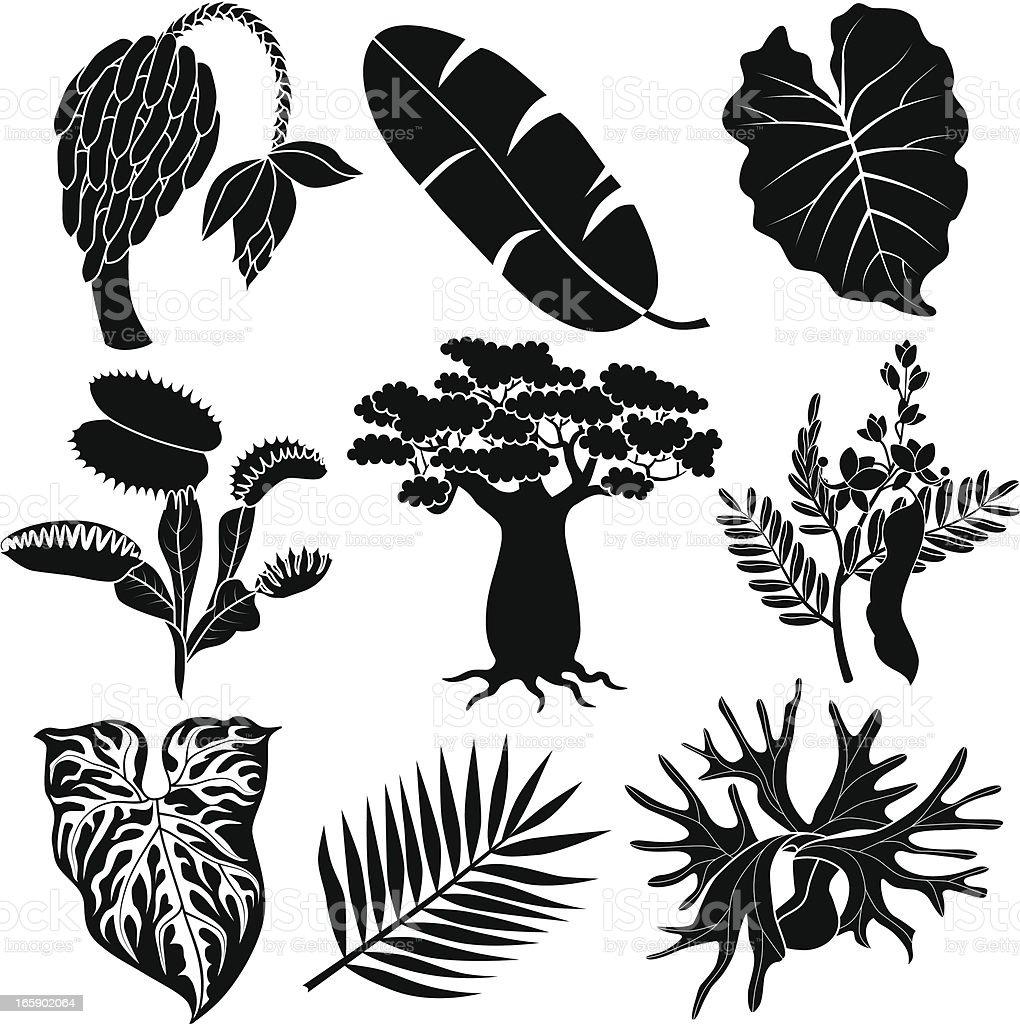 jungle flowers and plants vector art illustration