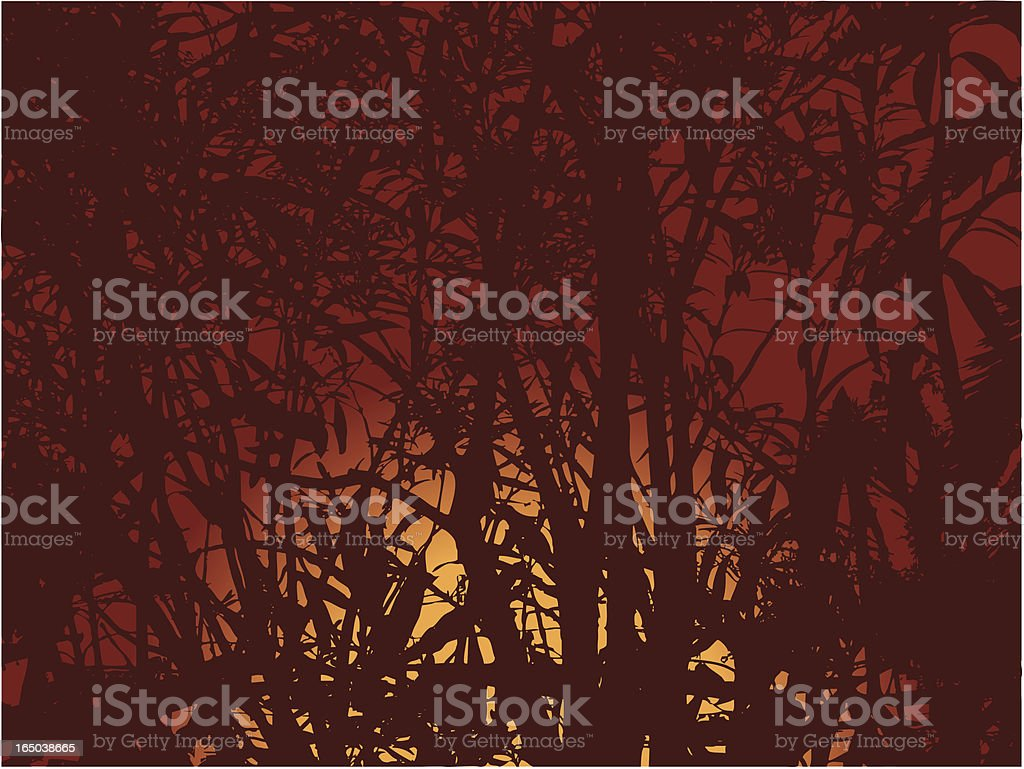 Jungle sunset royalty-free stock vector art