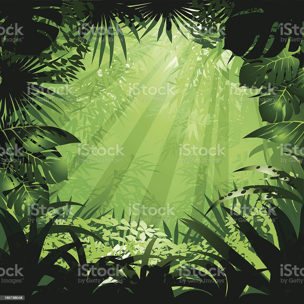 jungle vector art illustration