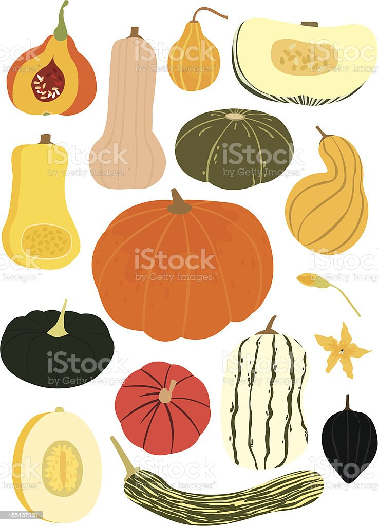 just squash! royalty-free stock vector art