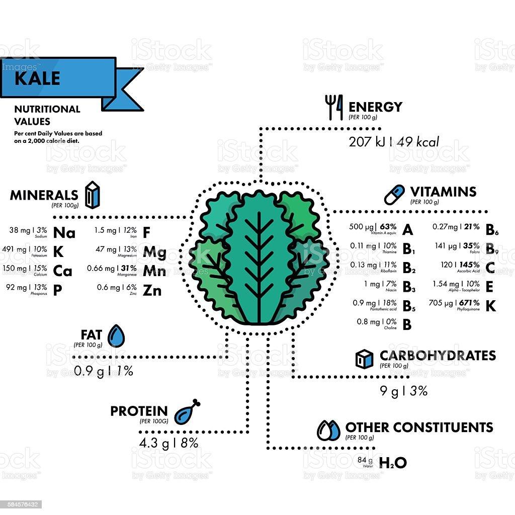 Kale - nutritional information. Healthy diet. vector art illustration