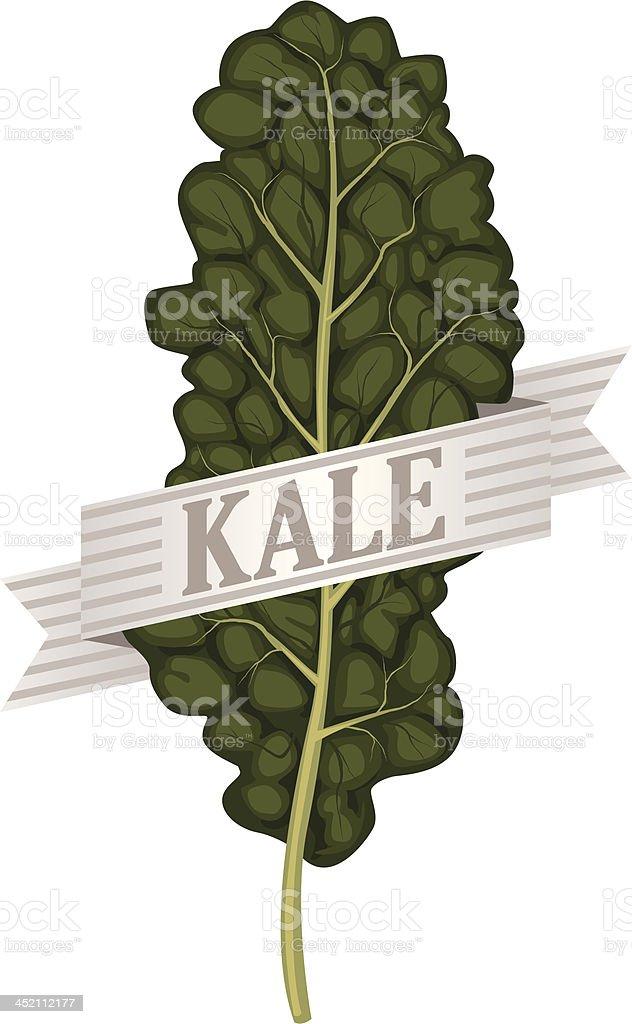 kale royalty-free stock vector art