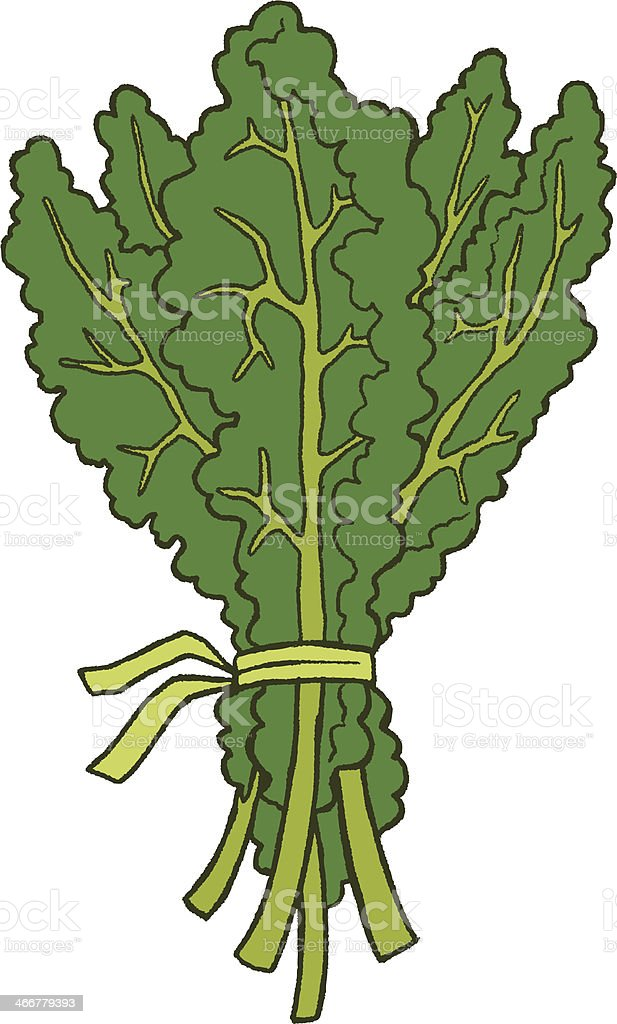Kale royalty-free stock vector art