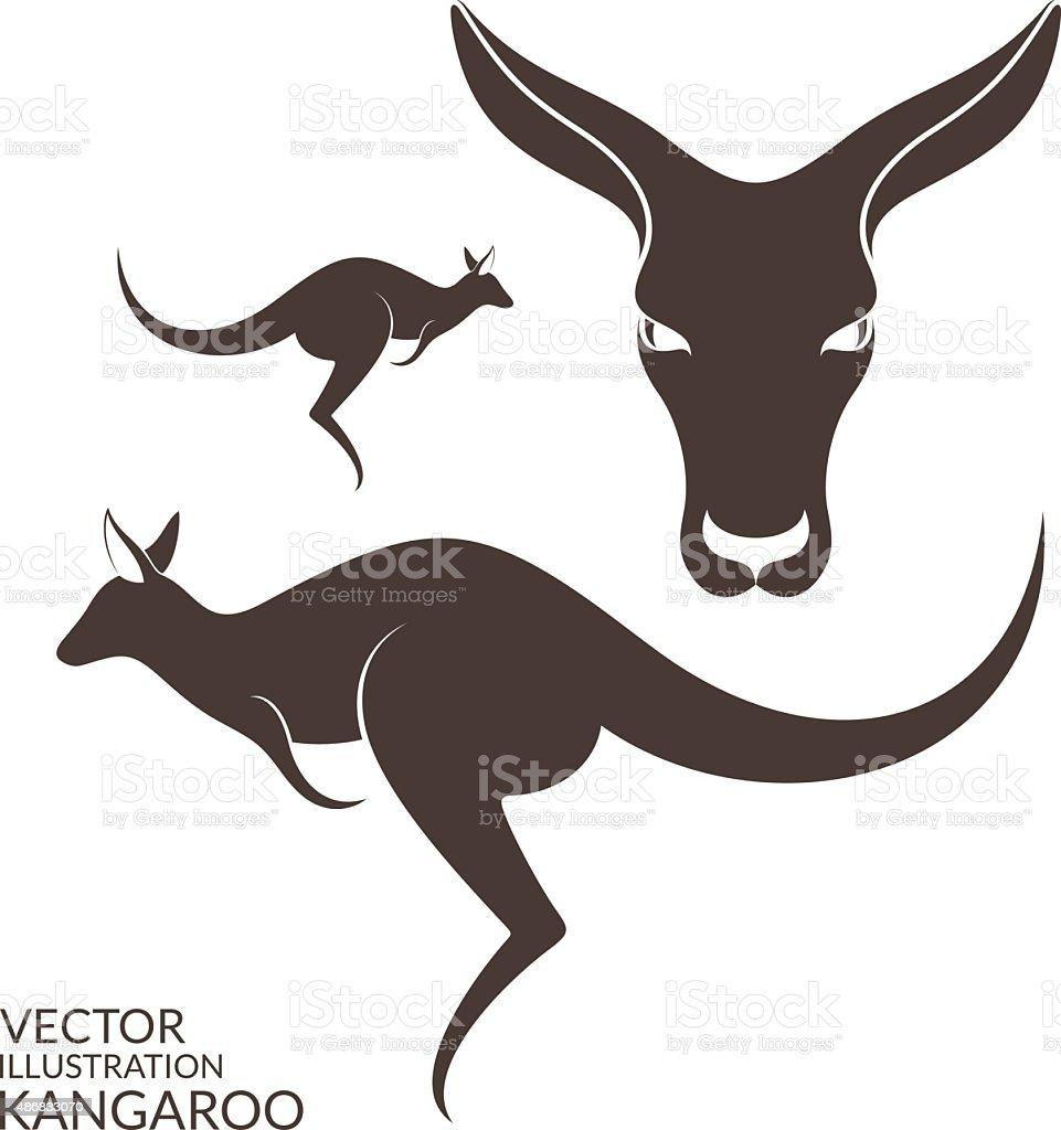 Kangaroo. Isolated animals on white background vector art illustration