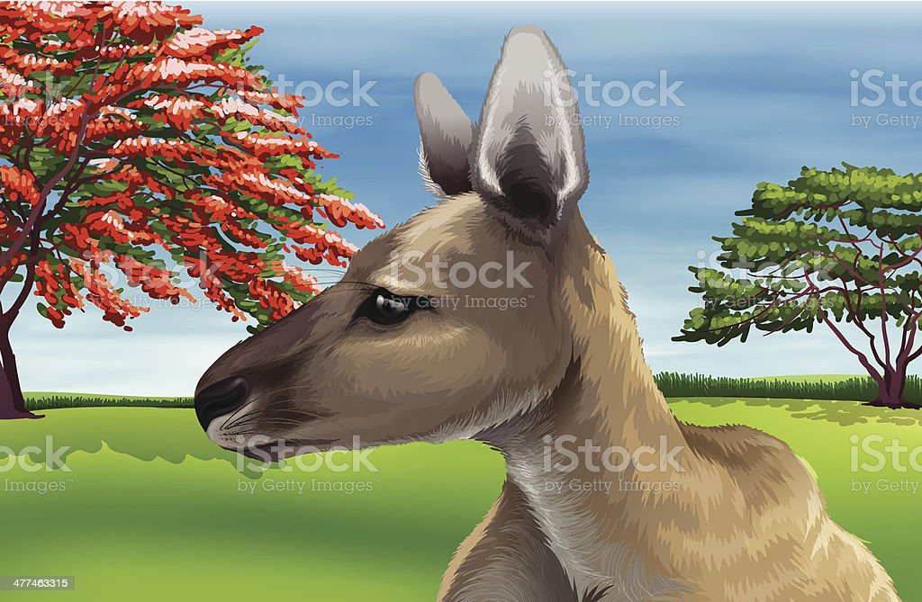 Kangaroo royalty-free stock vector art
