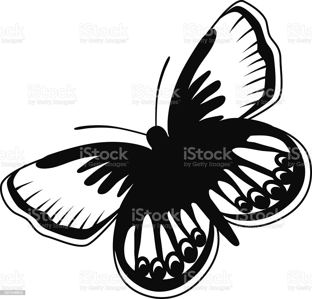 Karner blue North American butterfly in black and white vector art illustration