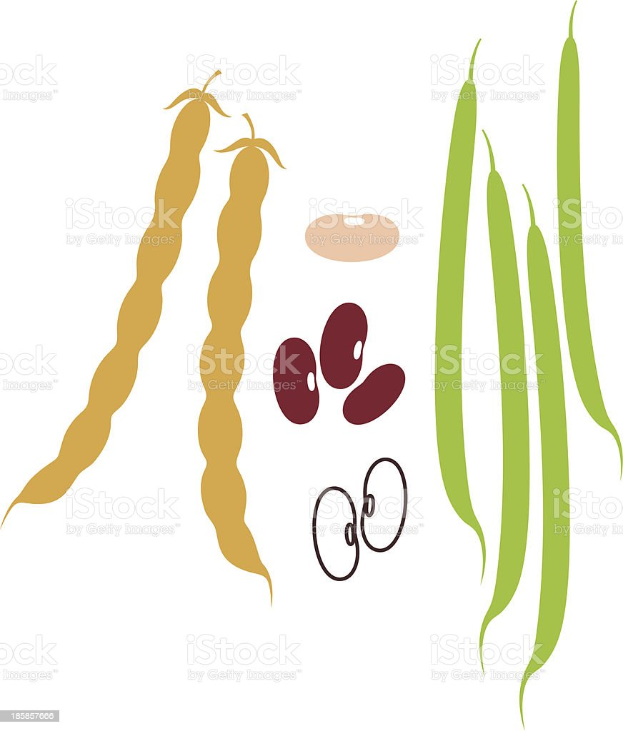 Kidney Bean vector art illustration