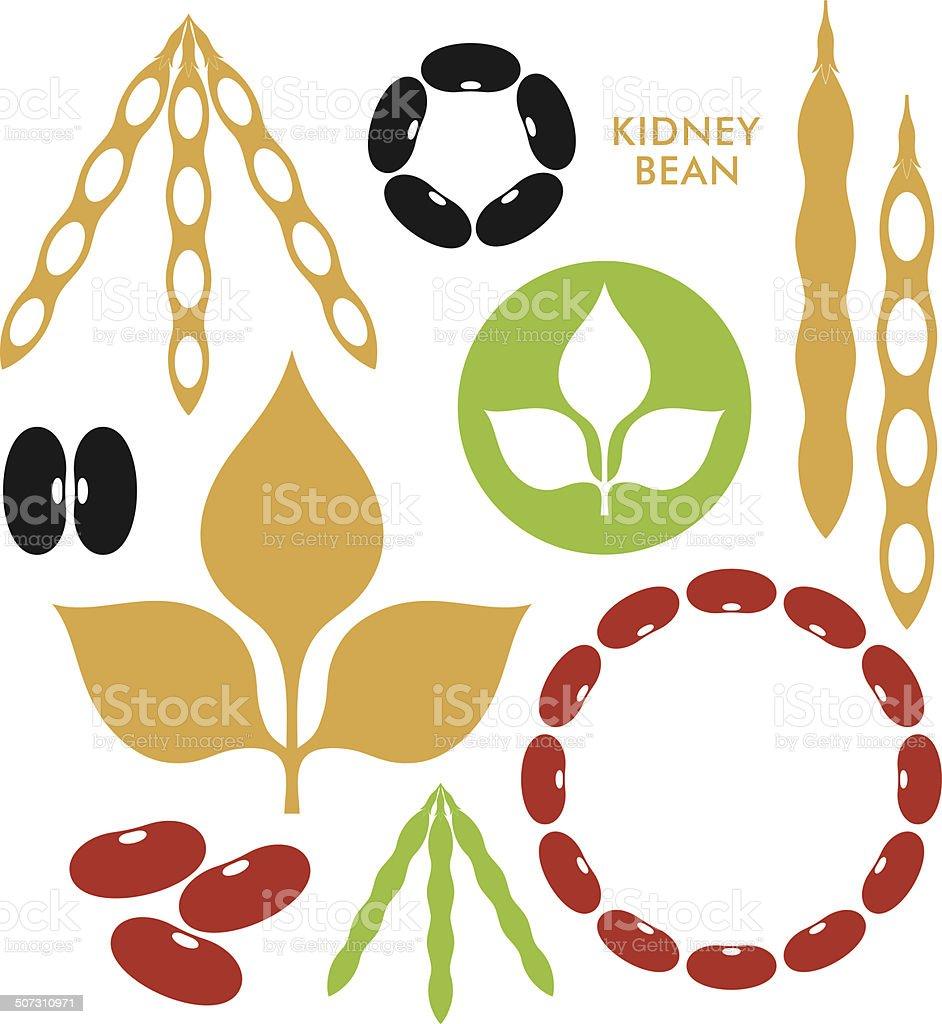 Kidney Bean vector art illustration