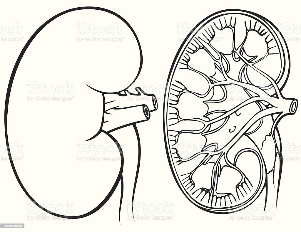 Kidney in Black and White royalty-free stock vector art