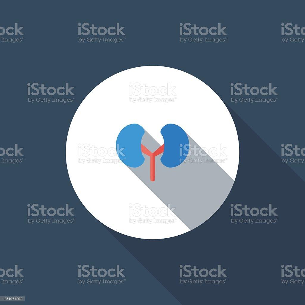 Kidney vector art illustration