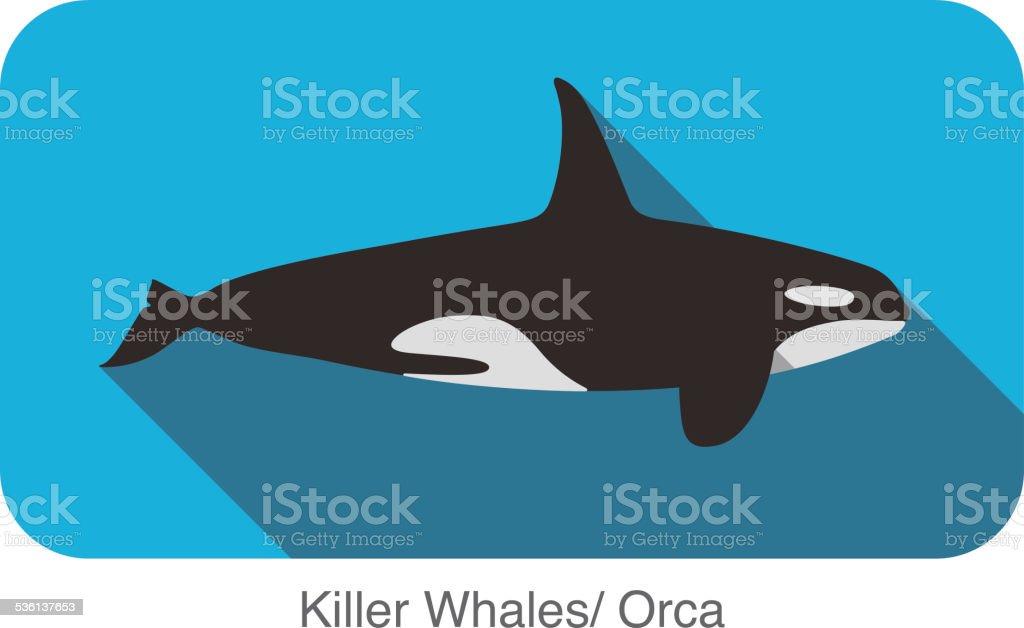 Killer Whale swimming in the sea flat icon design vector art illustration