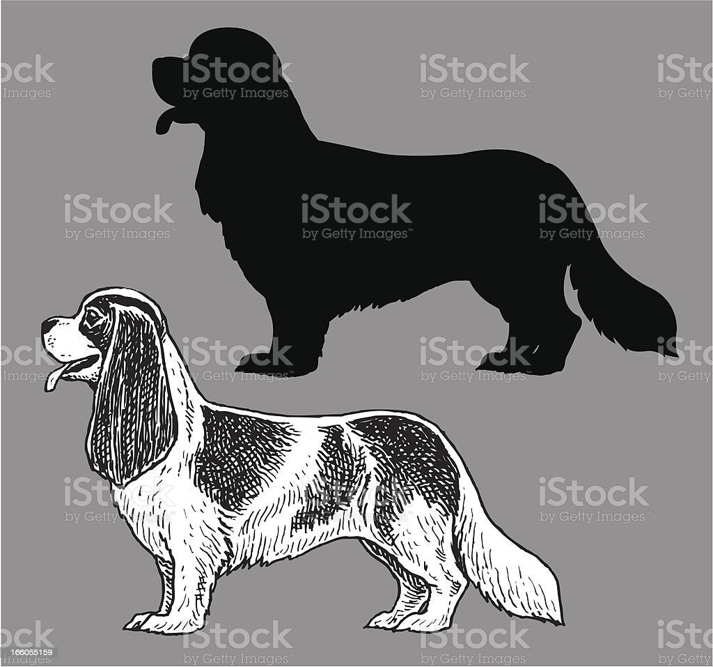 King Charles Spaniel - Dog, domestic pet royalty-free stock vector art