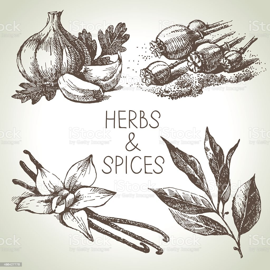 Kitchen herbs and spices. Hand drawn sketch design elements vector art illustration