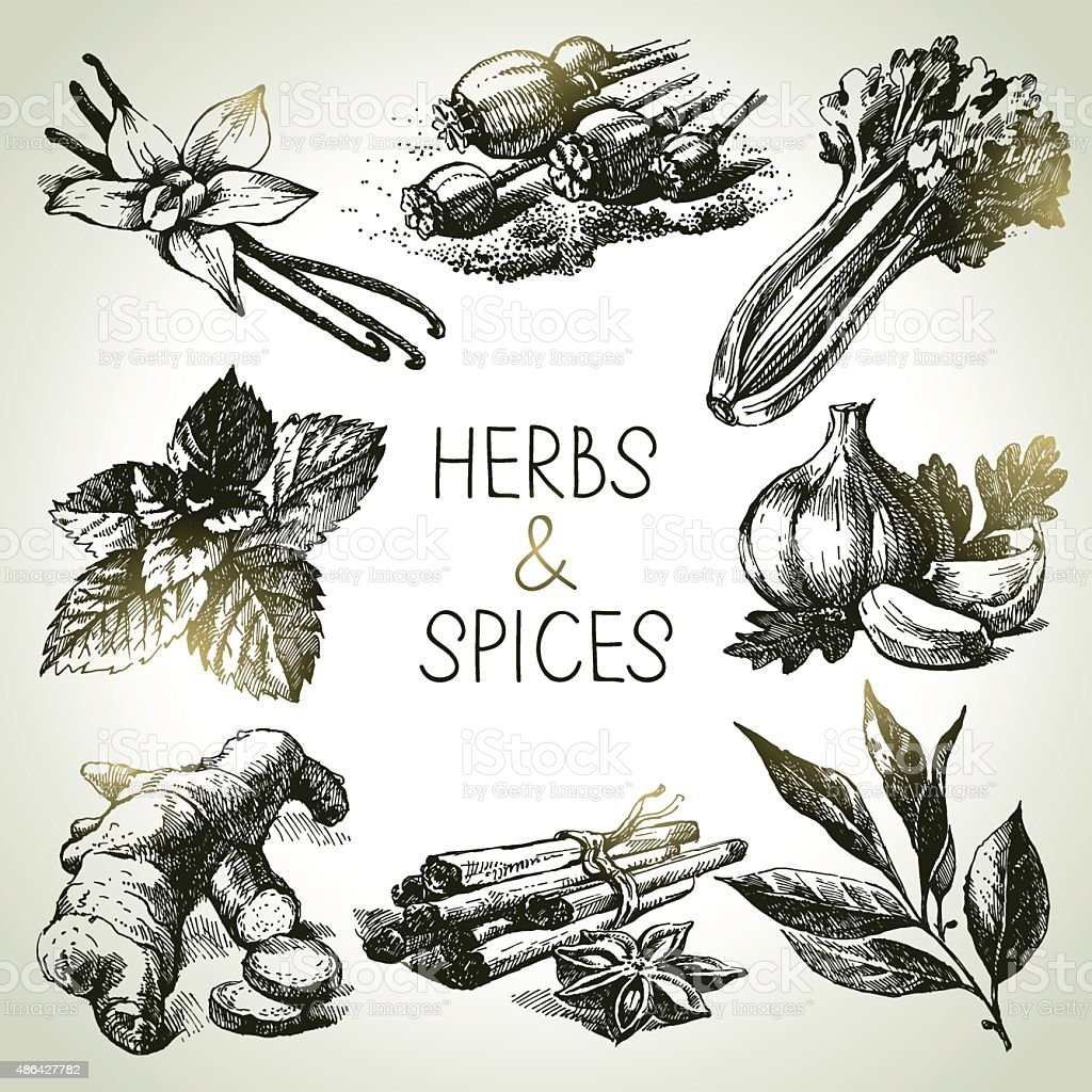 Kitchen herbs and spices. Hand drawn sketch icons vector art illustration