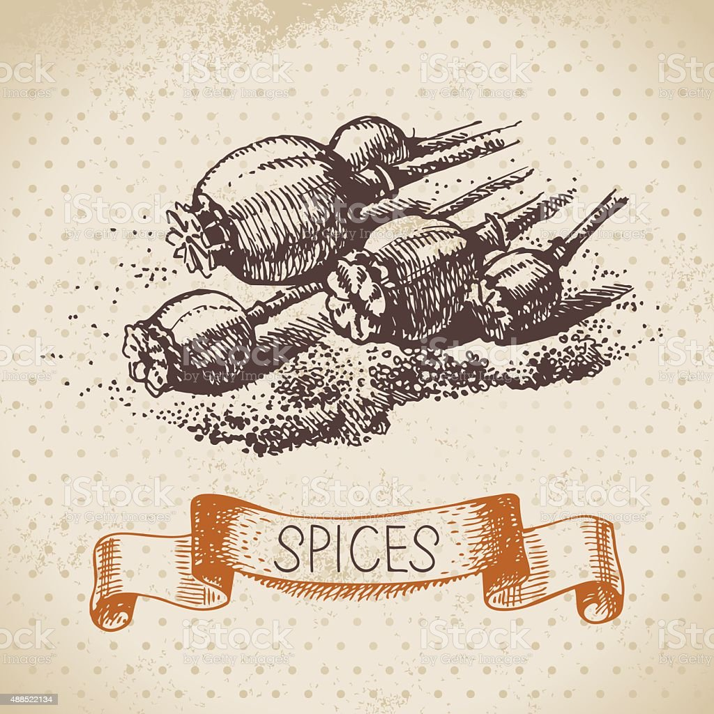 Kitchen herbs and spices. Vintage background with hand drawn ske vector art illustration
