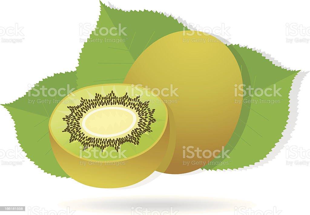 kiwifruit with leafs. vector art illustration