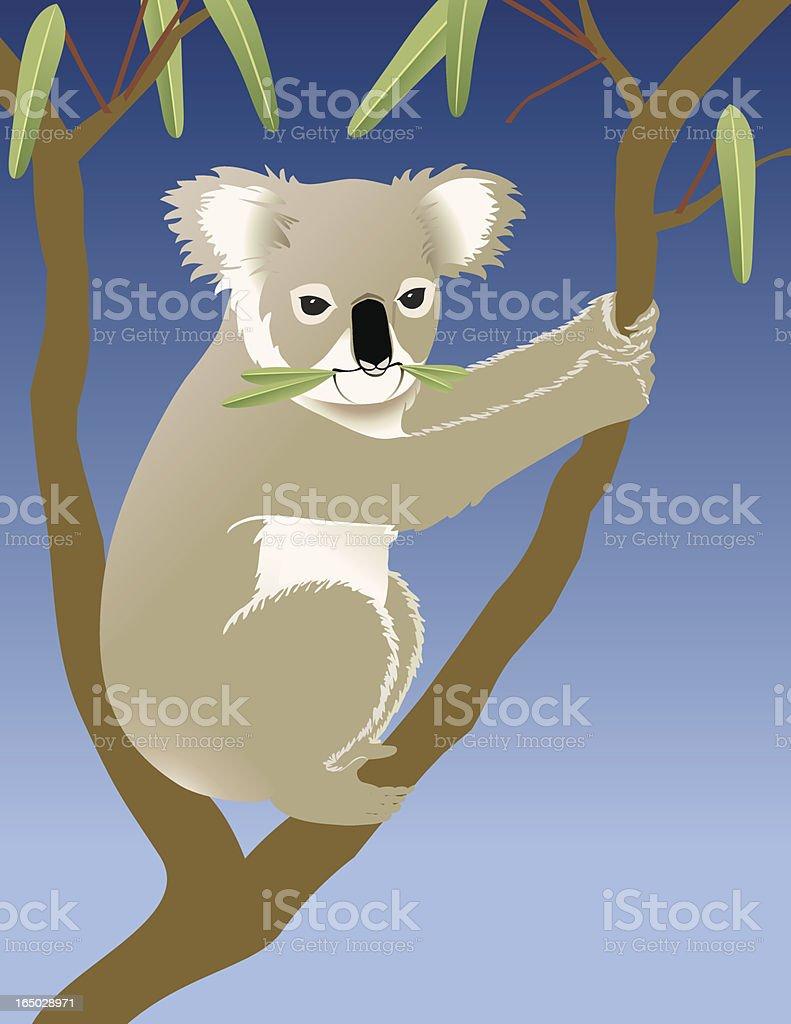 Koala eating eucalyptus in a tree vector art illustration