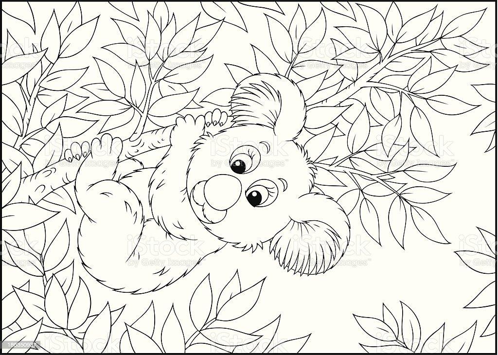 Koala vector art illustration