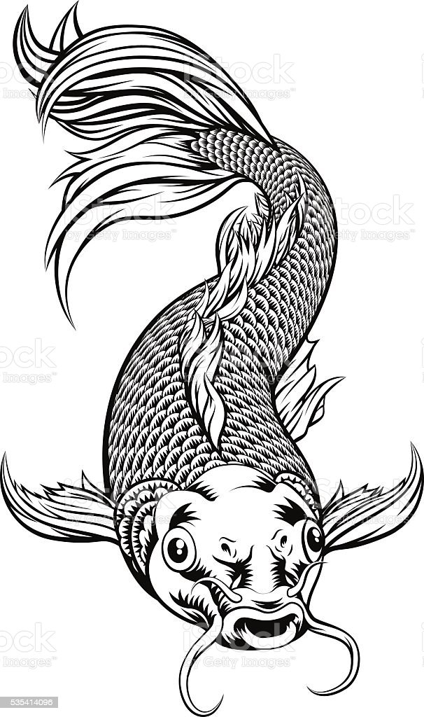 Koi Carp Fish vector art illustration