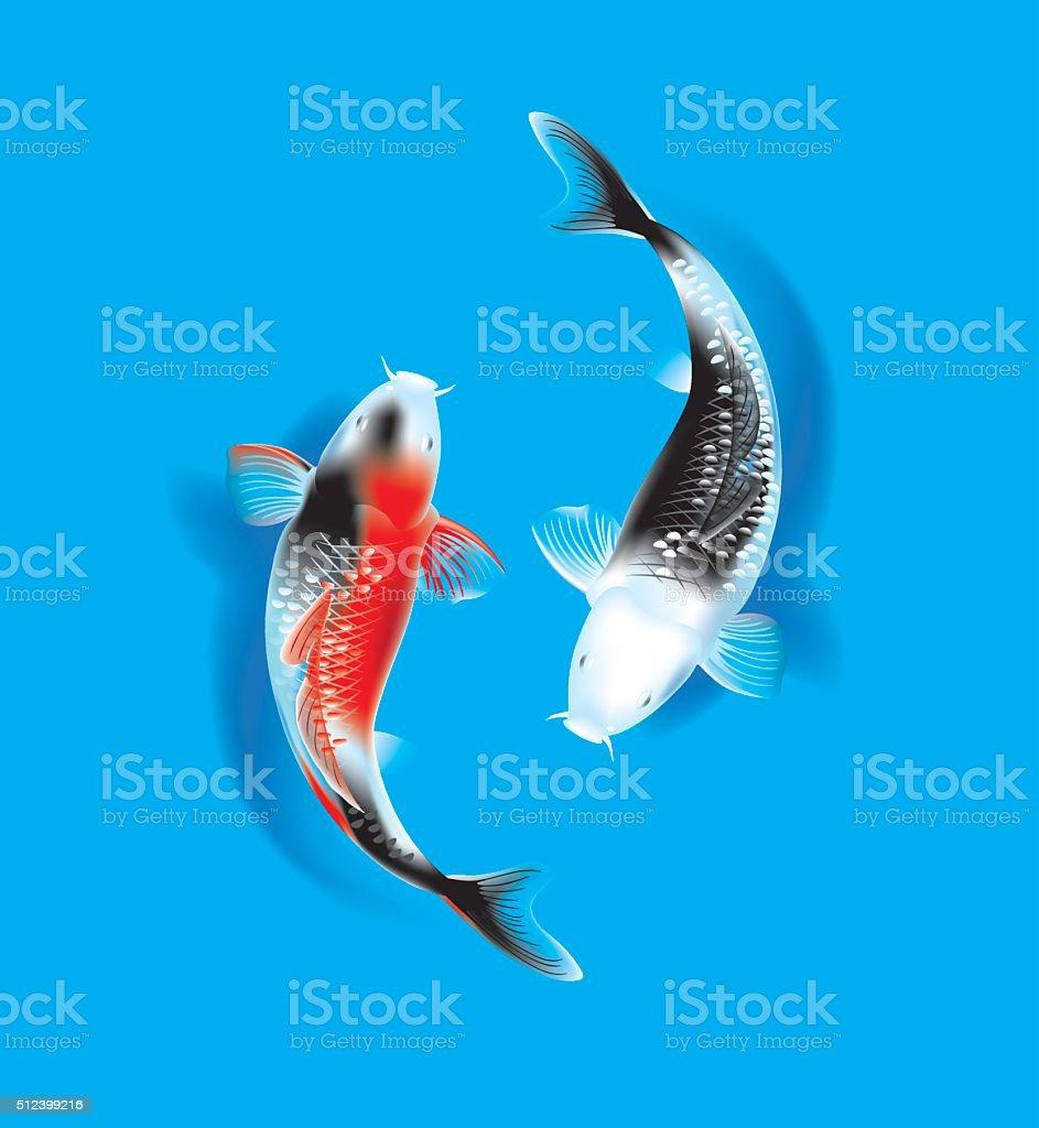 Koi couple on blue vector art illustration