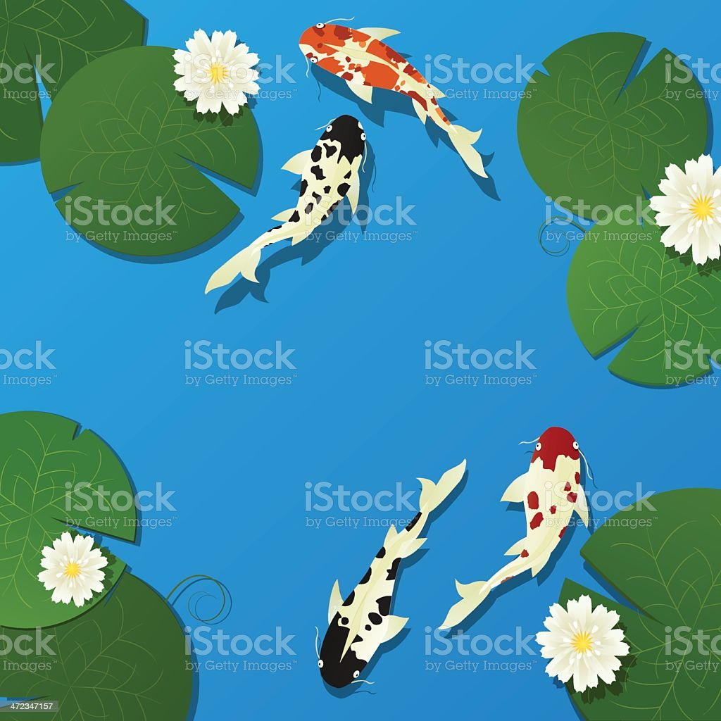 Koi fish and lotus royalty-free stock vector art