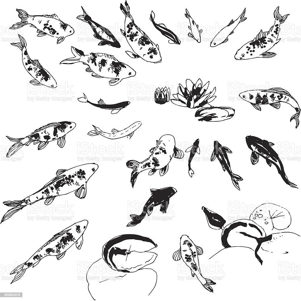 Koi fish set royalty-free stock vector art