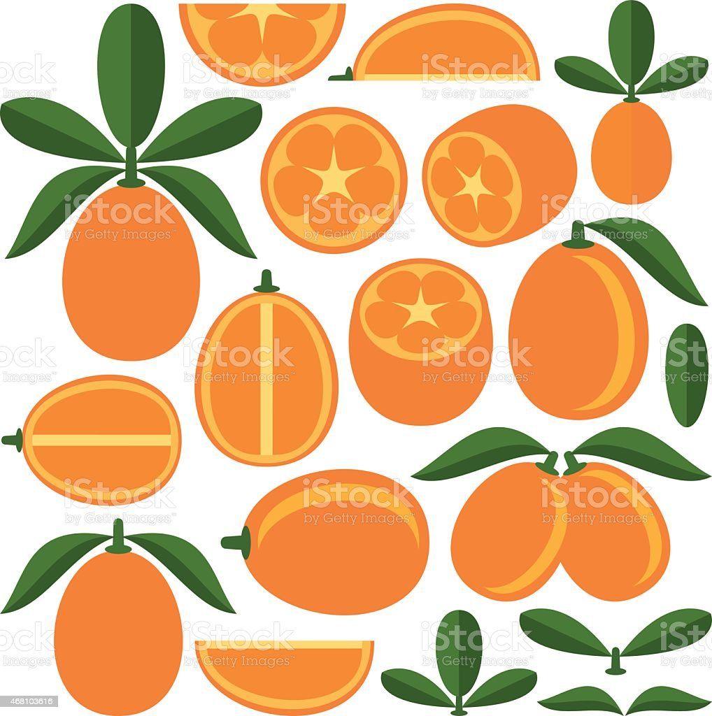 Kumquat vector art illustration