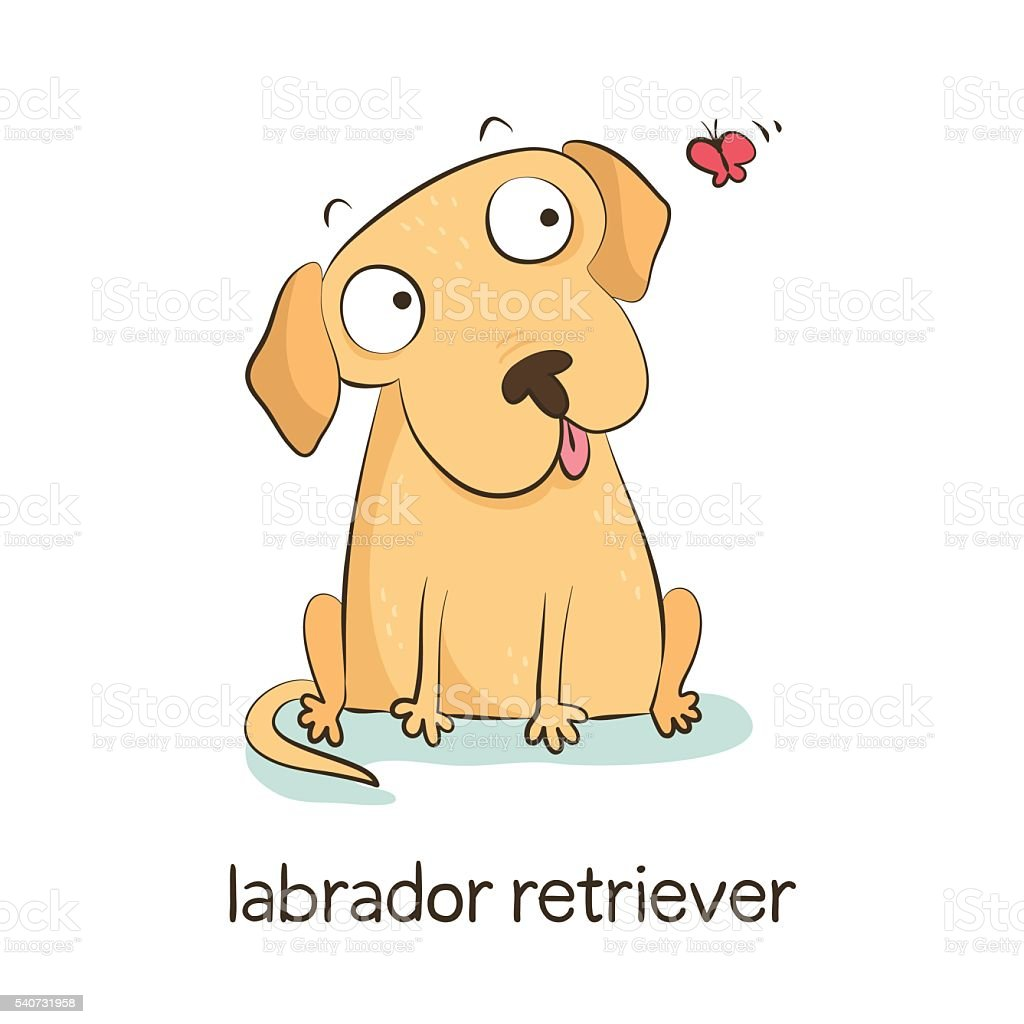 Labrador retriever. Dog character isolated on white vector art illustration
