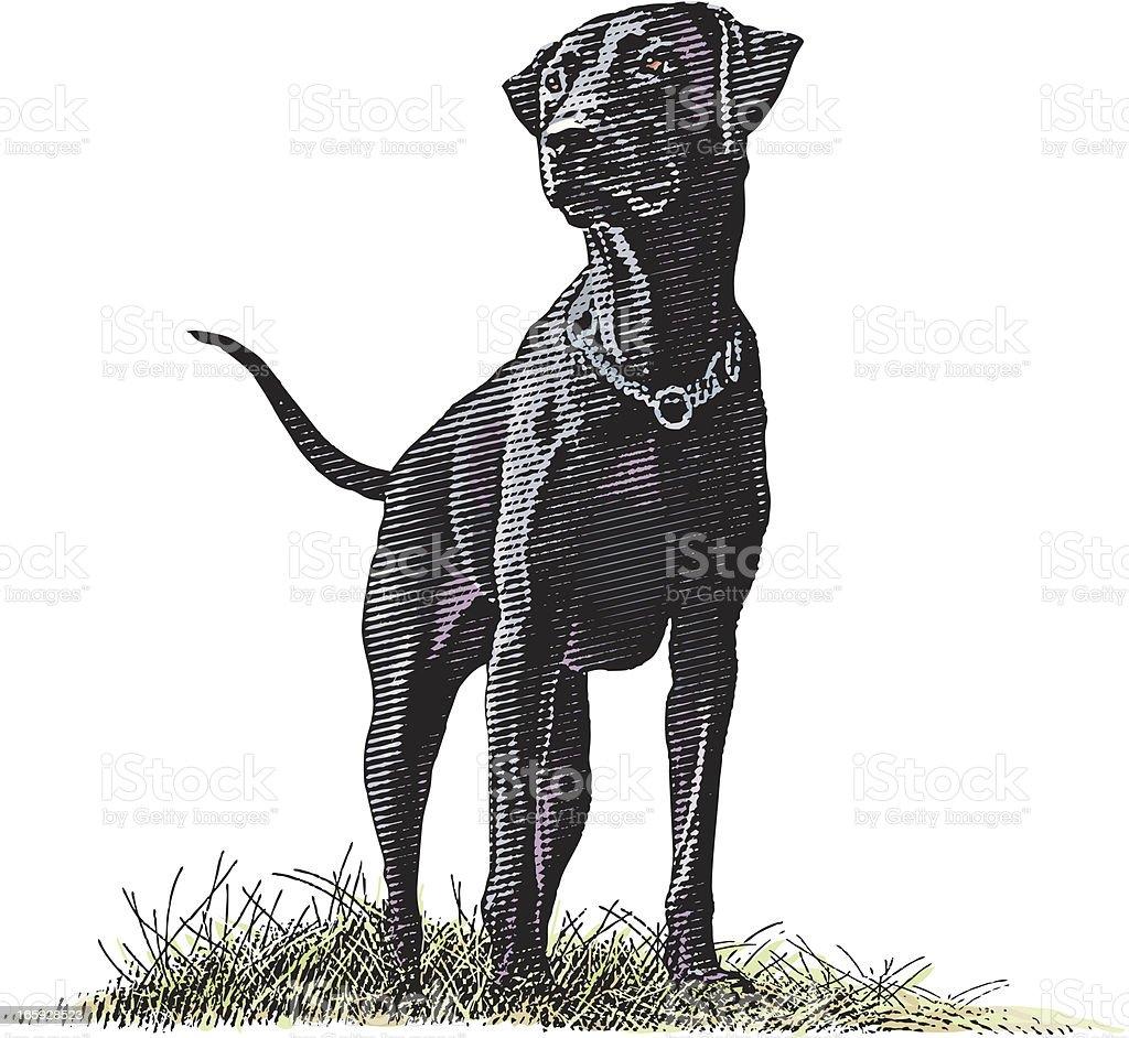 Labrador Retriever vector art illustration