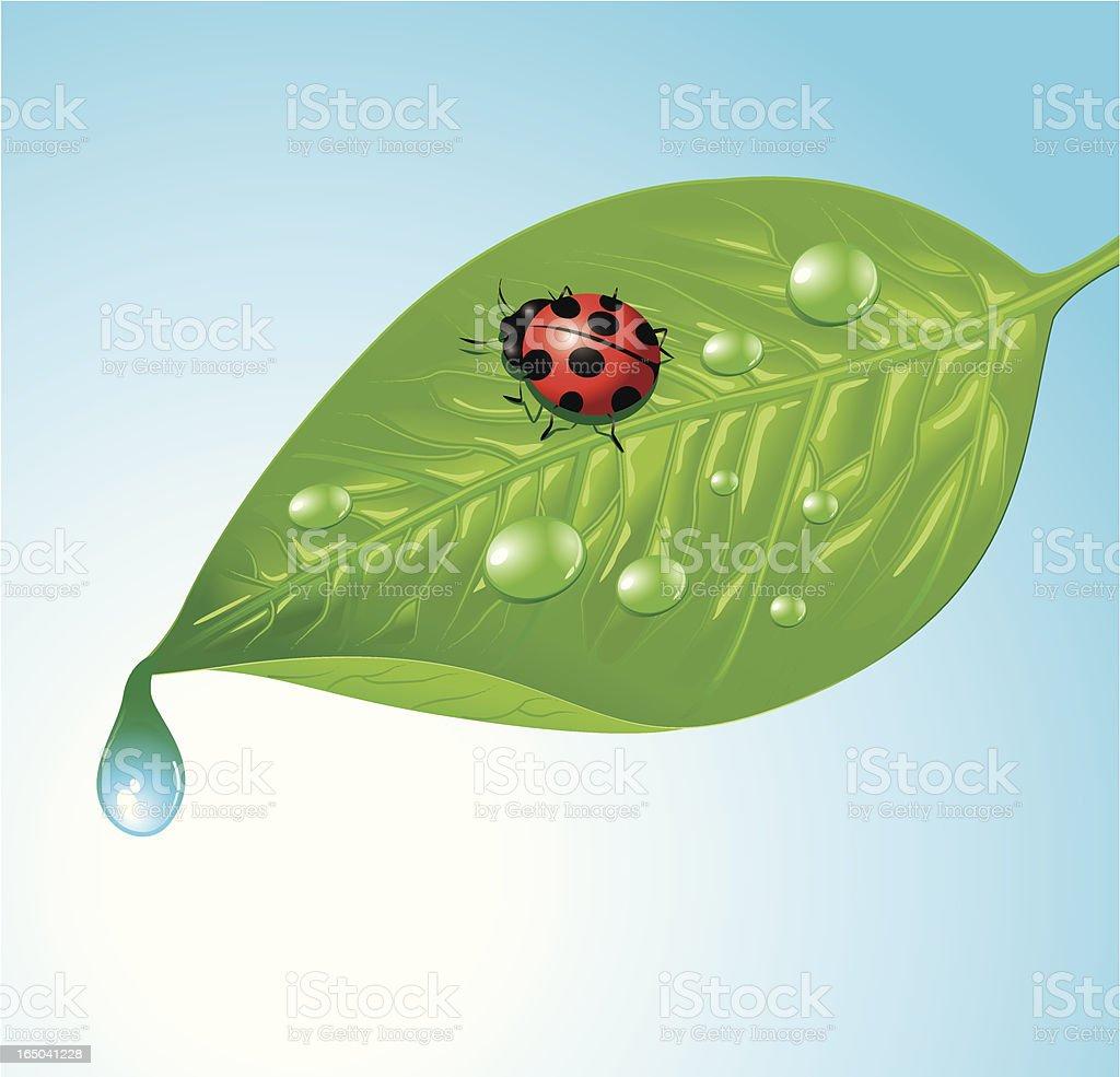 ladybird in morning dew royalty-free stock vector art