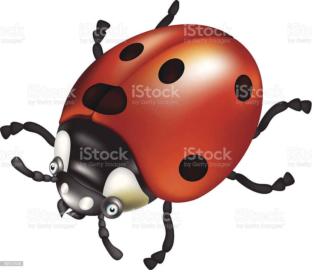 Ladybird royalty-free stock vector art