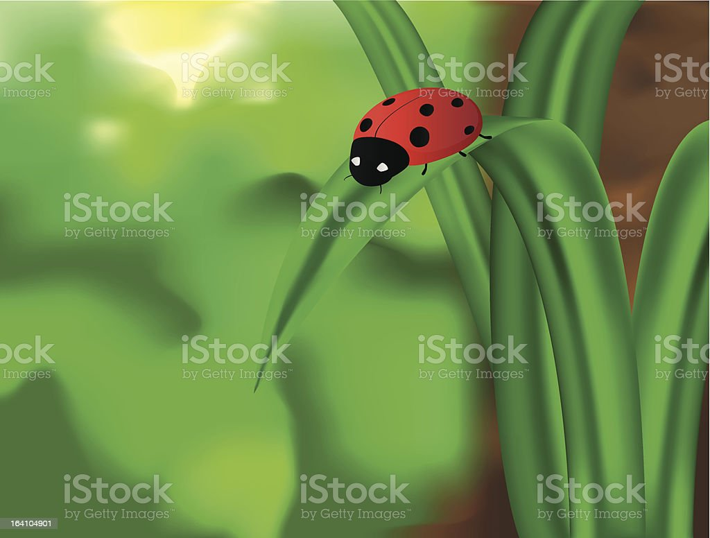 ladybug on a blade of grass royalty-free stock vector art