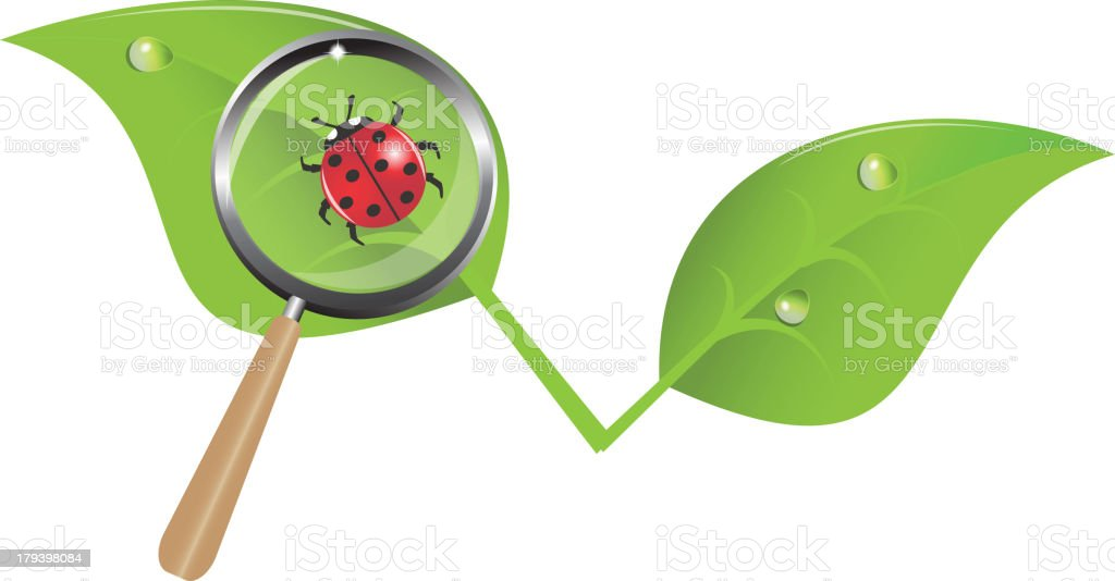 ladybug on a leaf royalty-free stock vector art