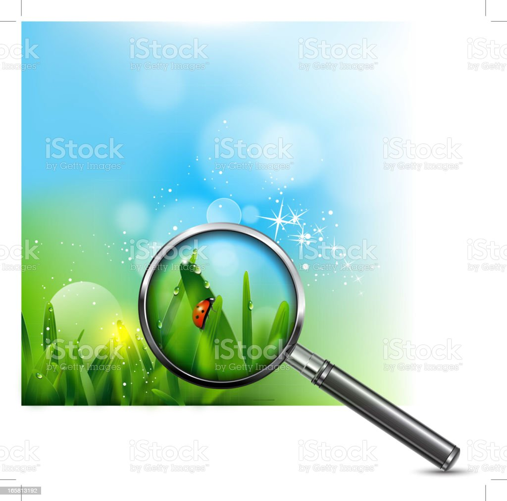 Ladybug on green grass royalty-free stock vector art