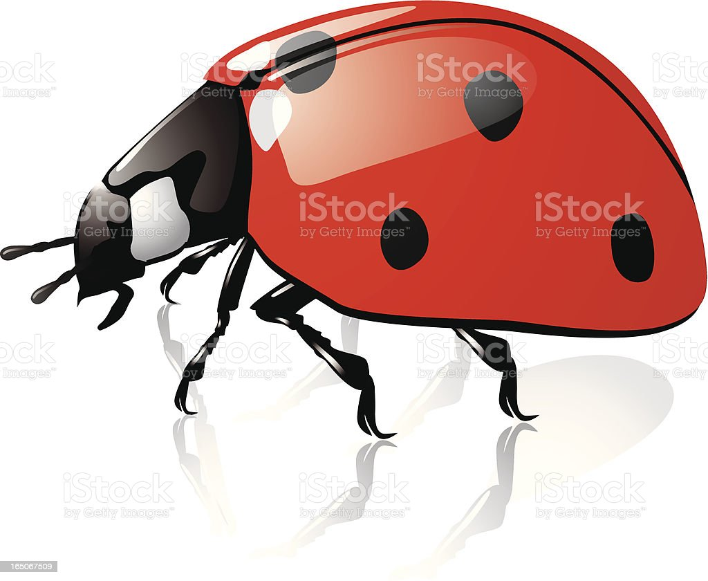 Ladybug,an insect in vectors royalty-free stock vector art